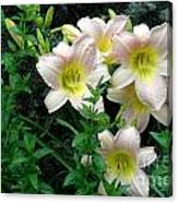 Rainy Day Day Lilies Canvas Print