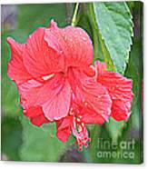 Rainy Day Hibiscus Canvas Print