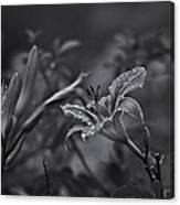 Rainy Day Lily Canvas Print