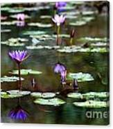 Rainy Day Lotus Flower Reflections Iv Canvas Print