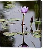 Rainy Day Lotus Flower Reflections V Canvas Print