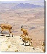Ramon Crater Negev Israel Canvas Print