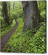 Ramsons By Path In Woods, County Louth Canvas Print