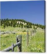 Rangeland Wild Flowers Canvas Print