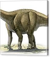 Rapetosaurus Krausei, A Prehistoric Era Canvas Print