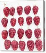 Raspberry Formation Canvas Print