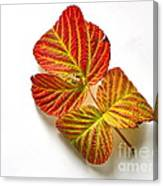 Raspberry Leaves In Autumn Canvas Print