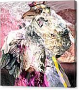Raven 6 Canvas Print