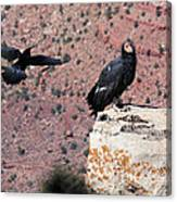 Raven Harassing Condor Canvas Print