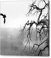 Raven In Grand Canyon Canvas Print