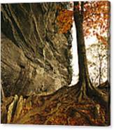 Raven Rock And Autumn Colored Beech Canvas Print