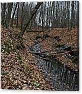 Ravine Creek Canvas Print