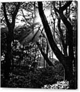 Ray Of Light Canvas Print