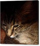 Ready For A Cat Nap Canvas Print