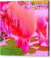 Really Pink Poodle Canvas Print