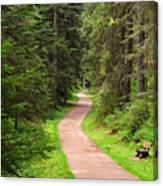 Recreation In Forest Canvas Print