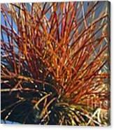 Red Air Plant Canvas Print