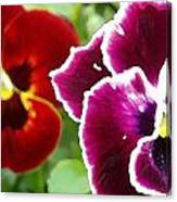 Red And Magenta Pansies Canvas Print
