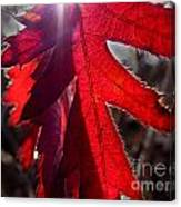 Red And Shadows Canvas Print
