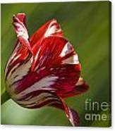 Red And White   Rouge Et Blanc Canvas Print
