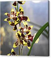 Red And White Orchid  Canvas Print
