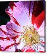 Red And White Speckled Flower Canvas Print