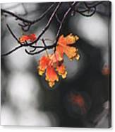 Red And Yellow Fall Leave's Closeup Canvas Print