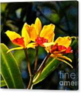 Red And Yellow Orchid Canvas Print