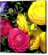 Red And Yellow Ranunculus Flowers Canvas Print