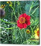 Red And Yellow Tiny Flowers Canvas Print