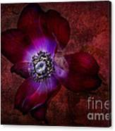 Red Anemone Canvas Print