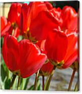 Red Art Spring Tulip Flowers Floral Canvas Print