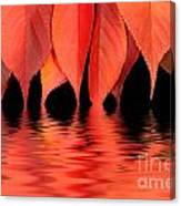 Red Autumn Leaves In Water Canvas Print