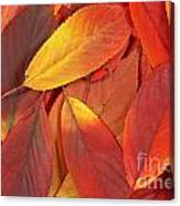 Red Autumn Leaves Pile Canvas Print