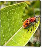 Red Beetle Munching Canvas Print