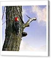 Red-bellied Woodpecker - Male Canvas Print