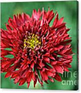 Red Blanket Flower Canvas Print