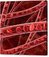 Red Blood Cells In Blood Vessels, Artwork Canvas Print
