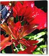 Red Bougainvillea Canvas Print
