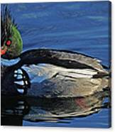 Red Breasted Merganser Canvas Print