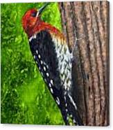 Red Breasted Sapsucker Canvas Print