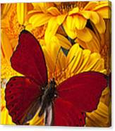 Red Butterfly On Yellow Gerbera Daisies  Canvas Print