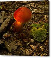 Red Caped Mushroom 4 Canvas Print