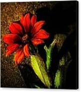 Red Coneflower Canvas Print