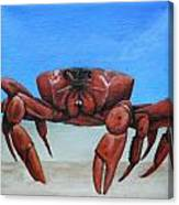 Red Crab Canvas Print