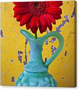 Red Daisy In Grape Vase Canvas Print