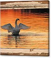 Red Dawn Swan Framed In Old Window Frame Canvas Print