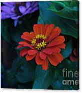 Red Delia Canvas Print