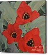 Red Emperor Tulip Study Canvas Print