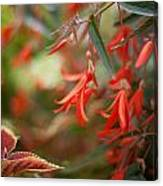 Red Exotic Canvas Print